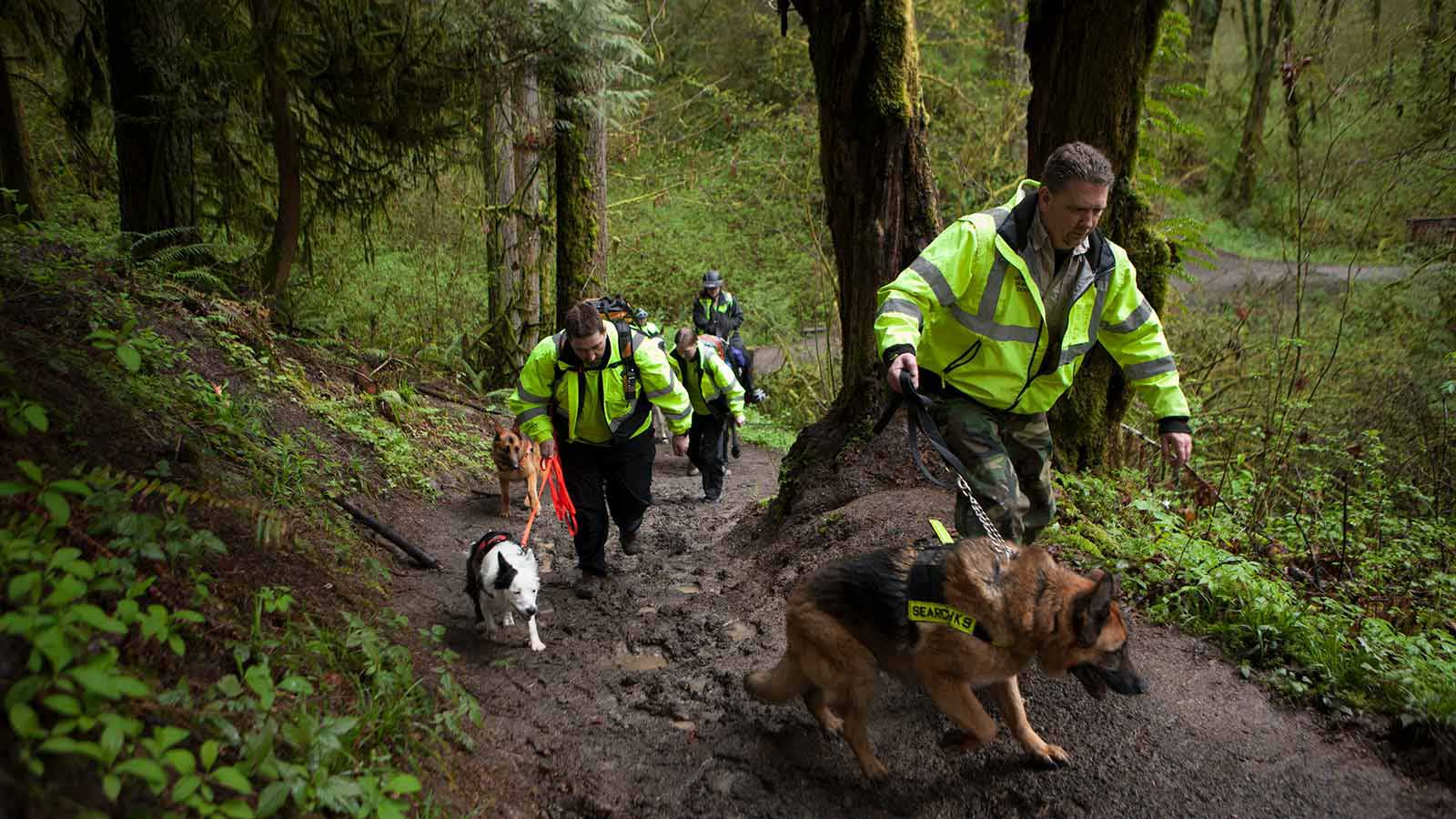 Men in neon jackets walking up a muddy path with dogs
