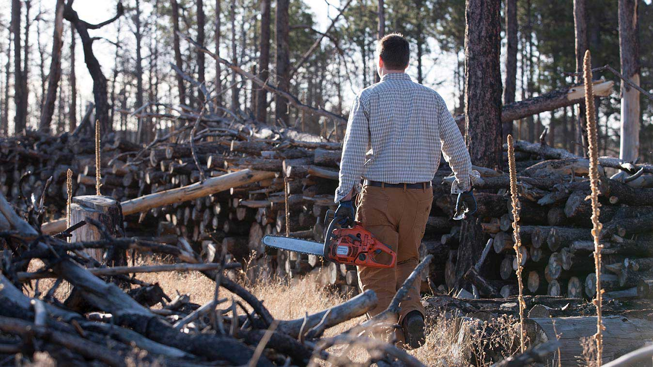 Neil walking by stacks of dead tree logs carrying a chainsaw