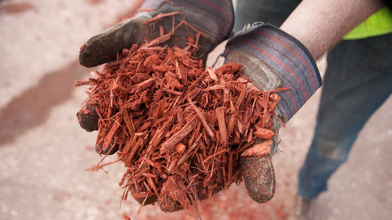 Two hands hold a small pile of red mulch