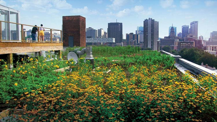 A vegetative roof in Chicago
