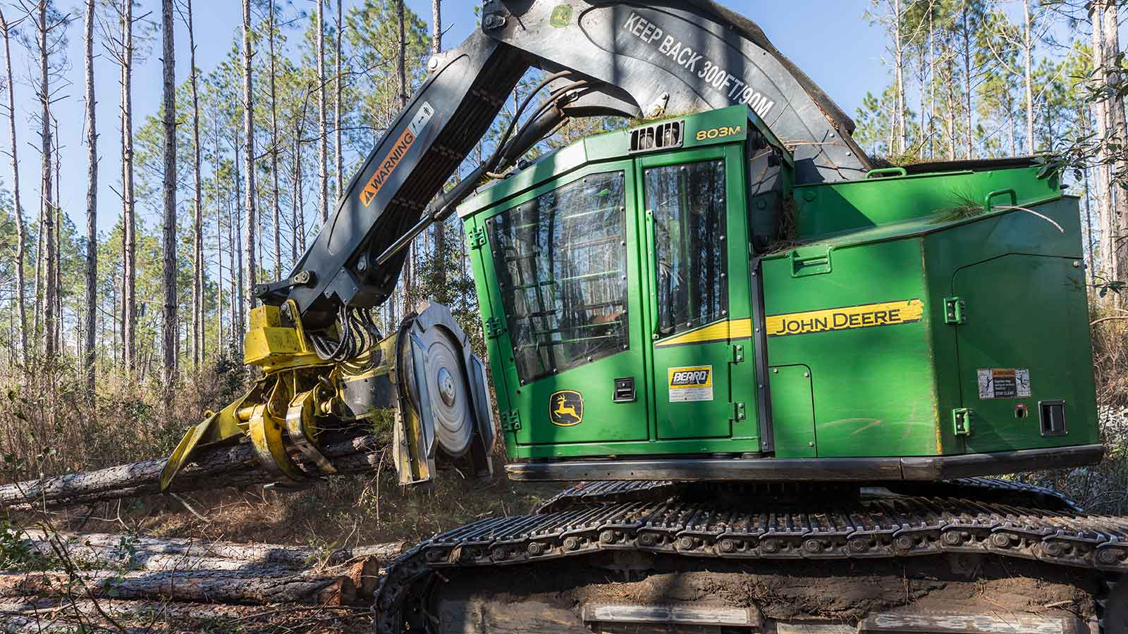 A John Deere 803M Tracked Feller Buncher cutting trees in a swampy forest.