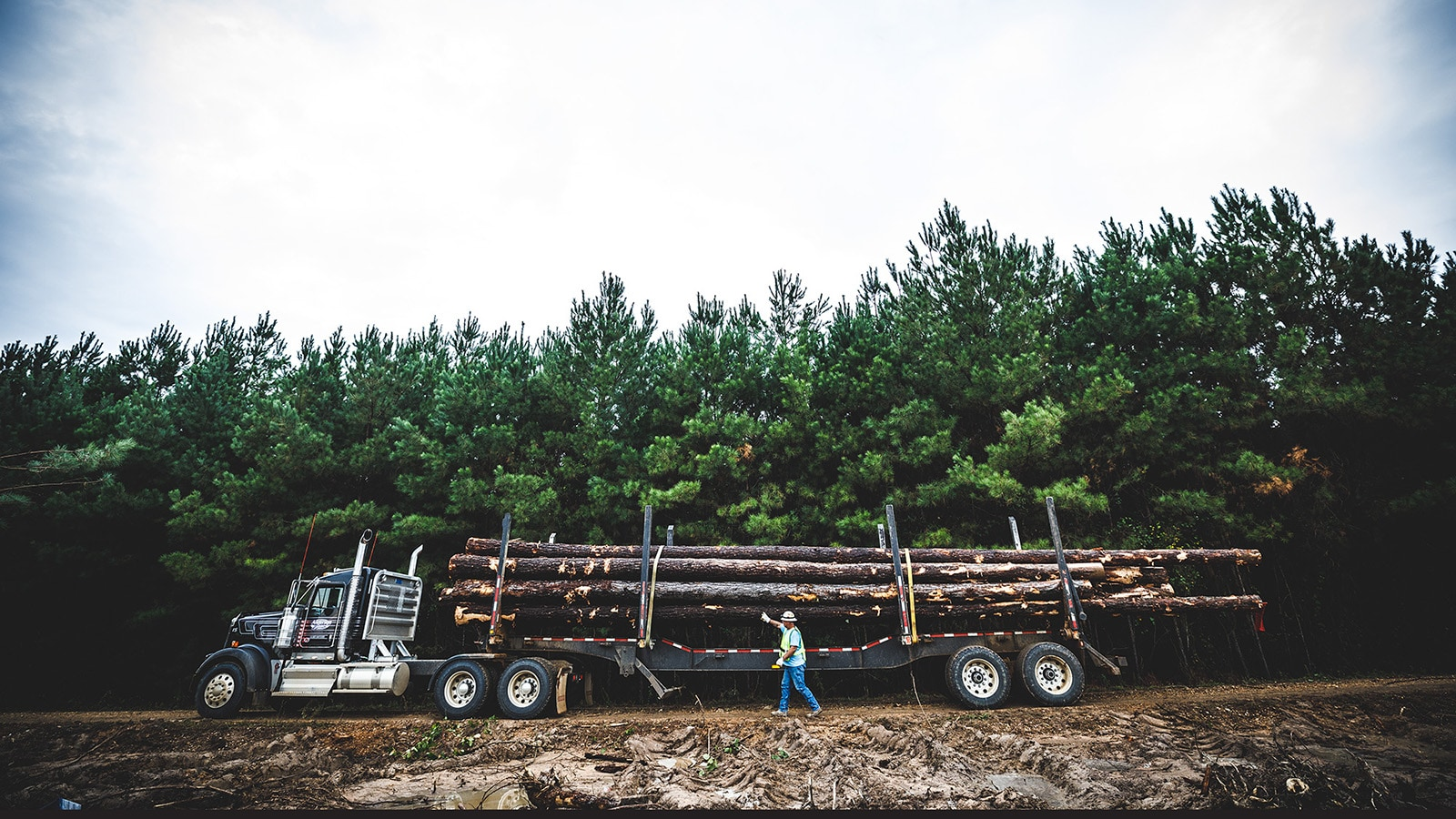 A man stands next to a truck loaded will full tree logs