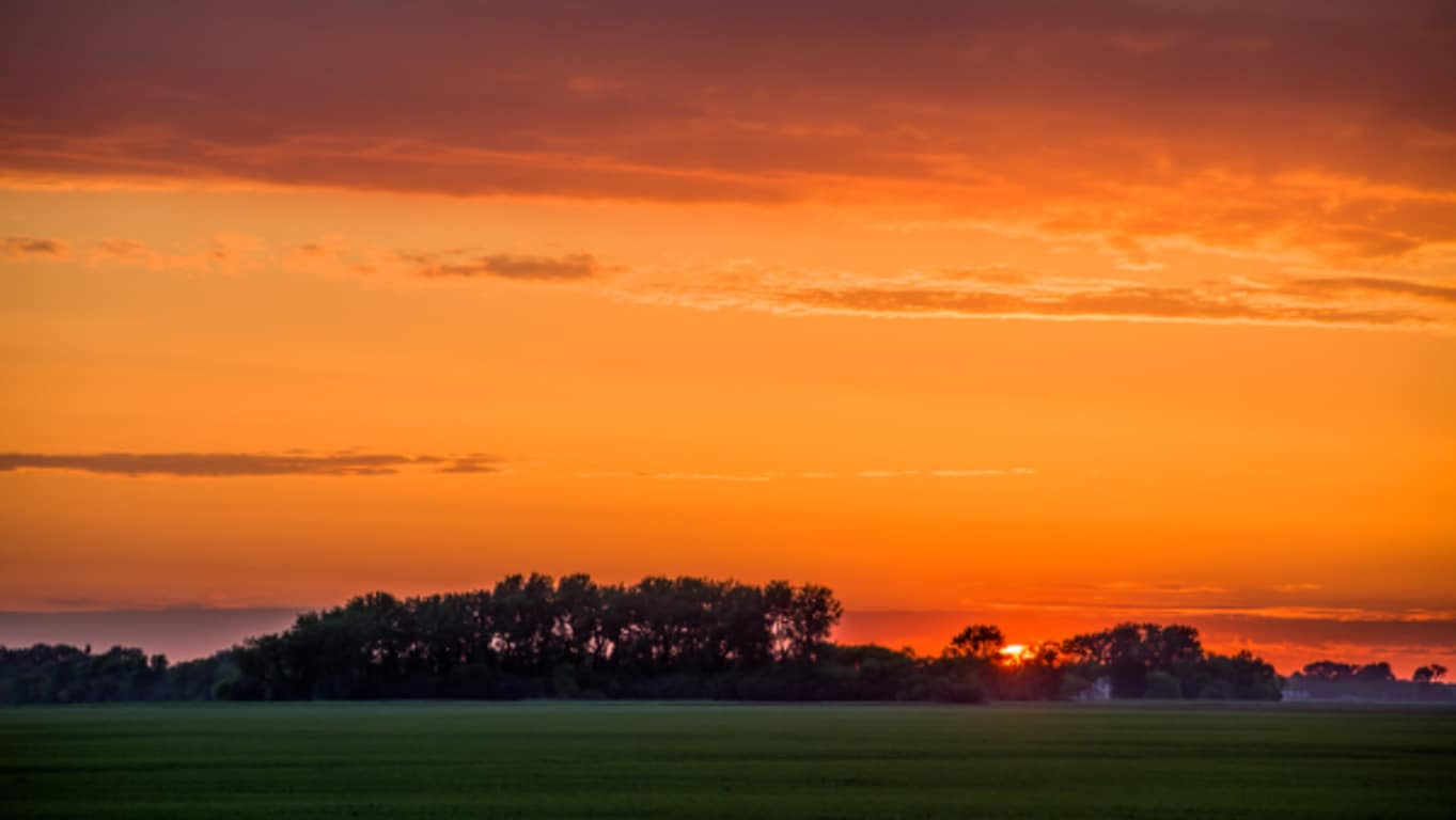 Farm field in front of a background of trees and bright orange sunset