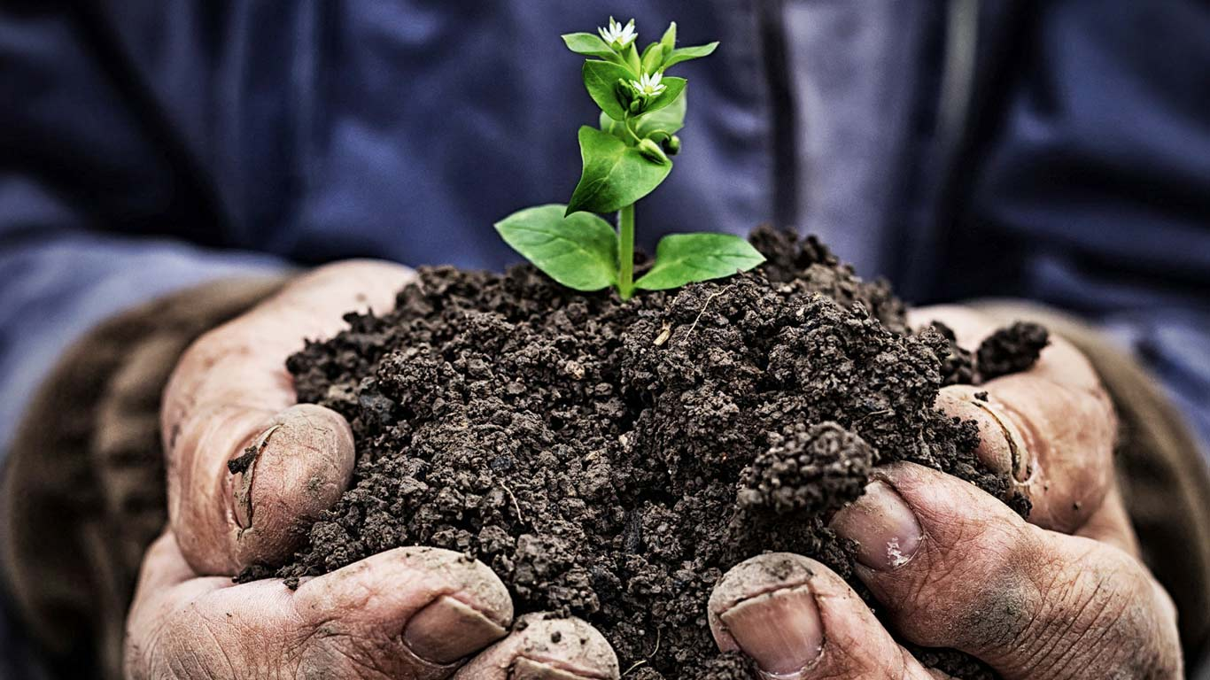 Image of plant in dirt with hands holding dirt