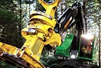 Closeup of an FR22B Felling Head at work in the forest